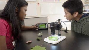 вивчення зразків рослин